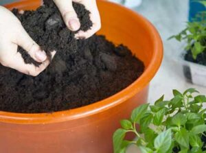 How Much Fertilizer per Square Foot for Vegetable Garden Is Needed