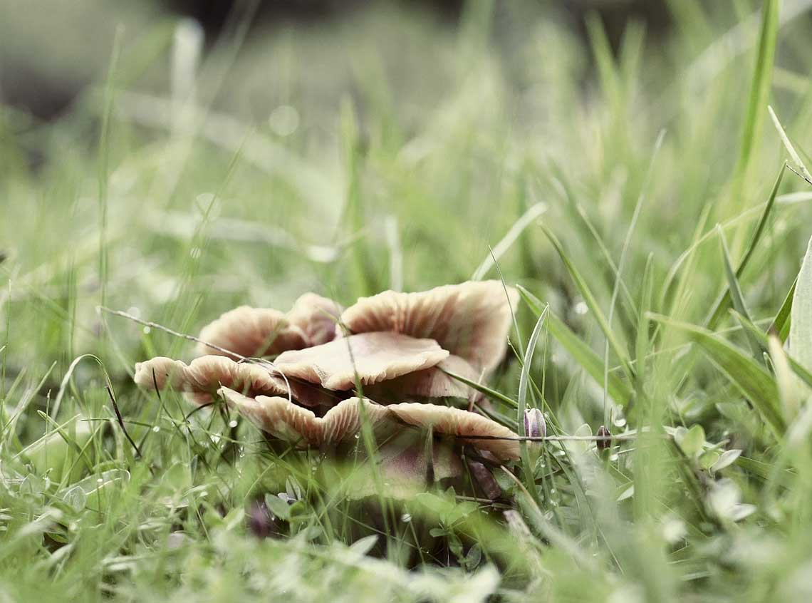 How To Get Rid of The Fungus in Garden Soil