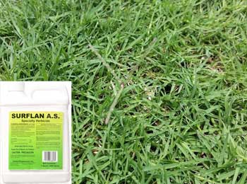 Pre Emergent For Bermuda Grass