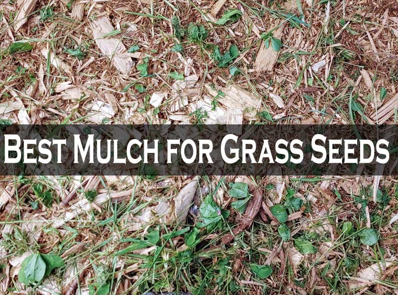 Best Mulch for Grass Seeds