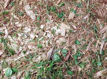 Mulch for Grass Seeds